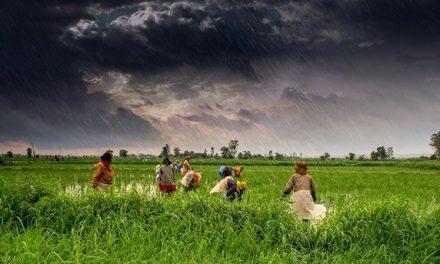 Las deudas conducen al suicidio a más de 300.000 campesina/os en India entre 1995 y 2015