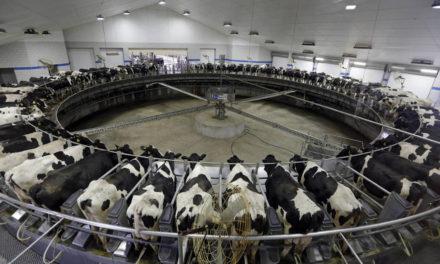 Emisiones imposibles: Cómo están calentando el planeta las grandes empresas de carne y lácteos