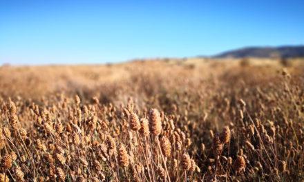 Cambio climático y falsas soluciones: Nuevos Organismos Modificados Genéticamente (OMG) en la alimentación, una oportunidad para privatizar la biodiversidad