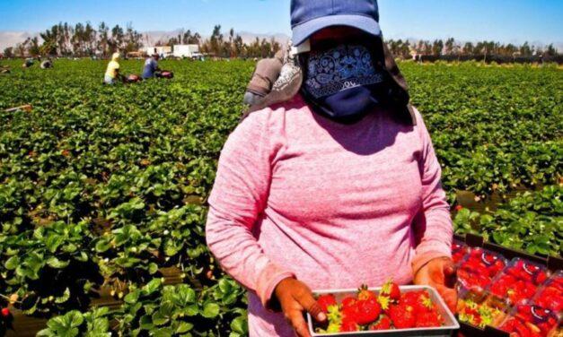 Asociaciones de derechos humanos piden el regreso inmediato a Marruecos de casi 7.200 trabajadoras agrícolas varadas en Huelva