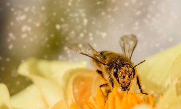 El clima reduce a la mitad la cosecha de miel