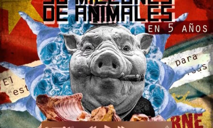 Rebelión en la macrogranja: Por qué Argentina no quiere convertirse en la fábrica porcina de China