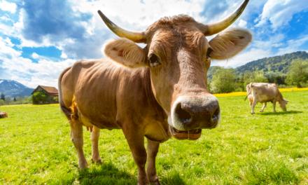 """El informe de la Comisión Europea, """"una provocación para el millón de ganaderos que venden su leche a precios inferiores a los costes de producción"""", según la Vía Campesina"""