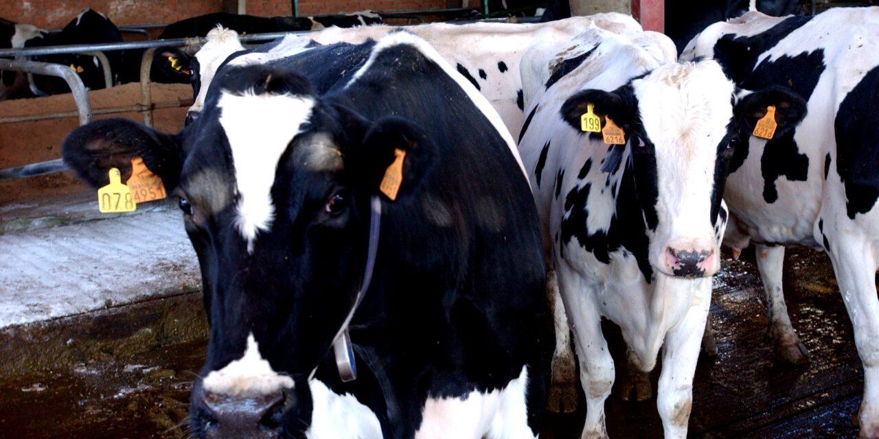 El Gobierno aprueba un real decreto para disponer de más información sobre el sector lácteo