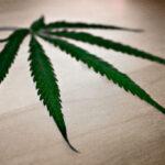 Luz verde al debate sobre el cannabis en el Congreso español